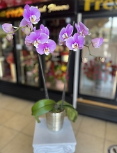 Light Purple Orchid